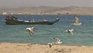 Eritrean afros
